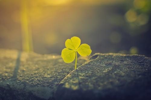 three-leaf-clover